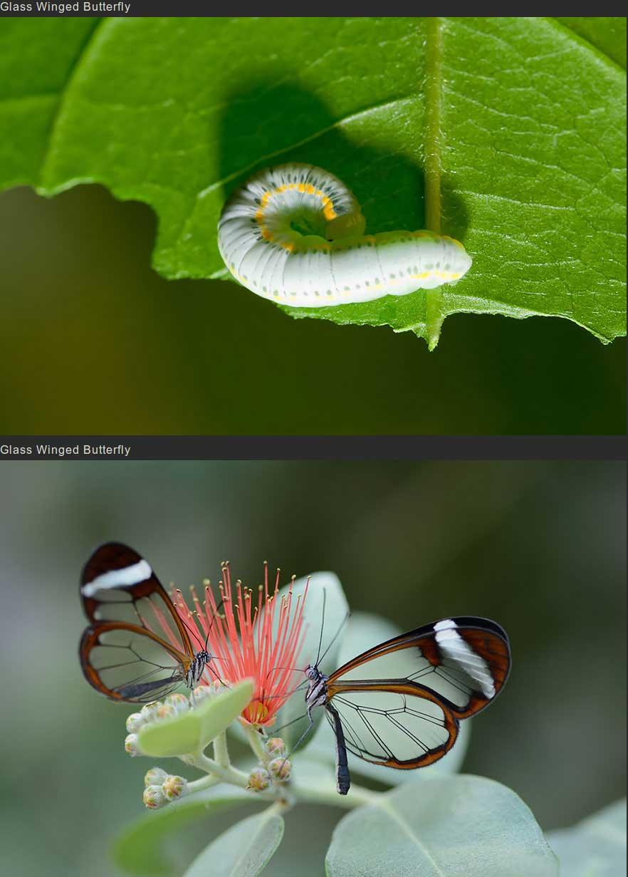 butterflies-moths-before-after