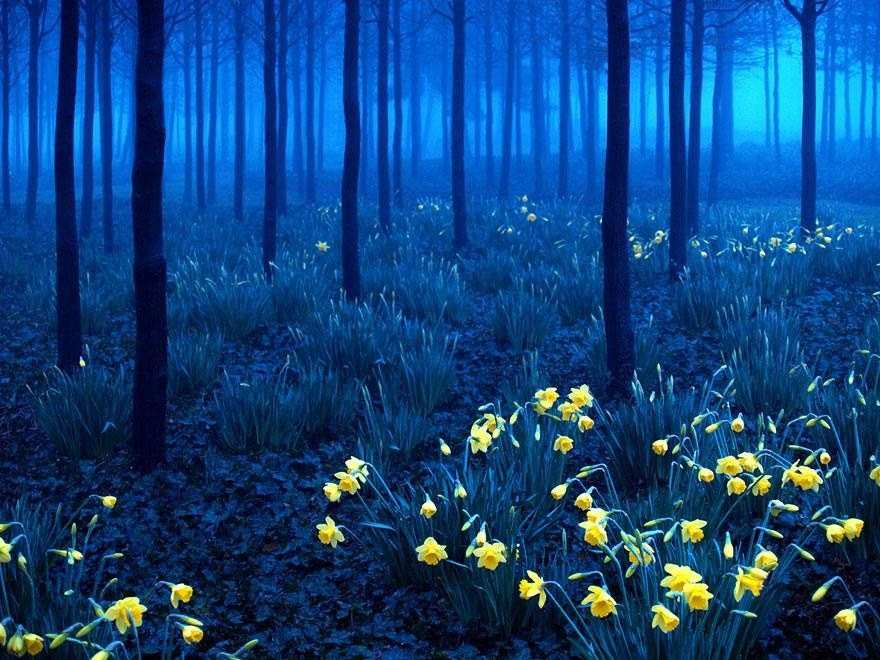 surreal place black forest Germany 2