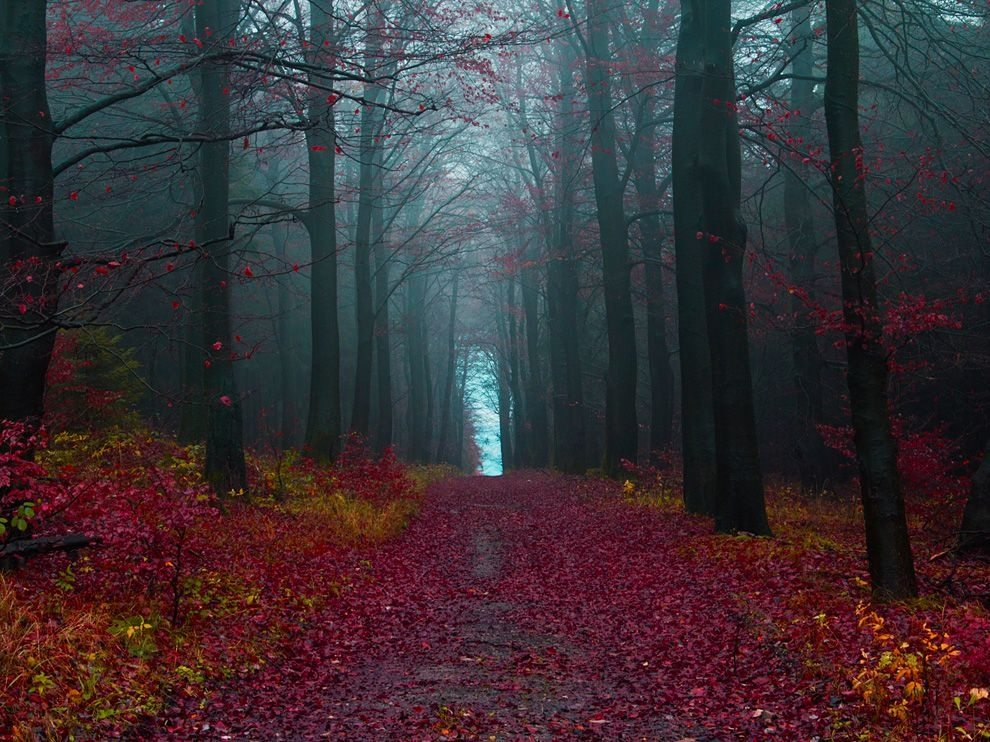 surreal place black forest Germany